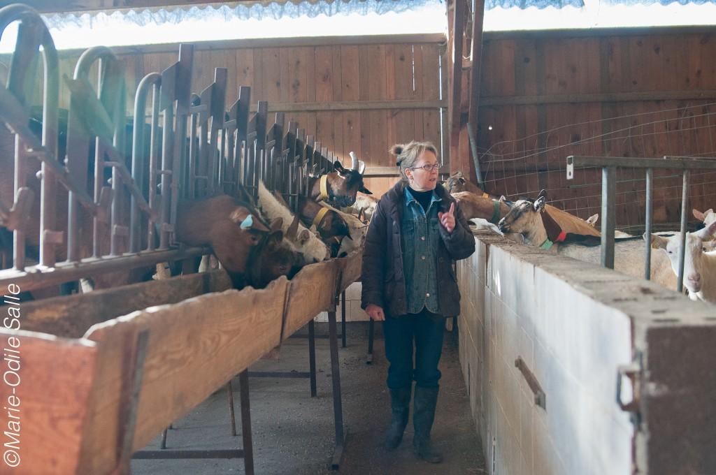 La traite à la bergerie